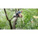 ECHO DCS-2500T (1/4 - 0.043) Top Handle Chainsaw Only